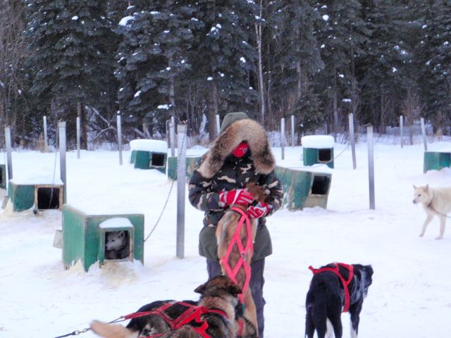 Arctic-Style-Dog-Mushing