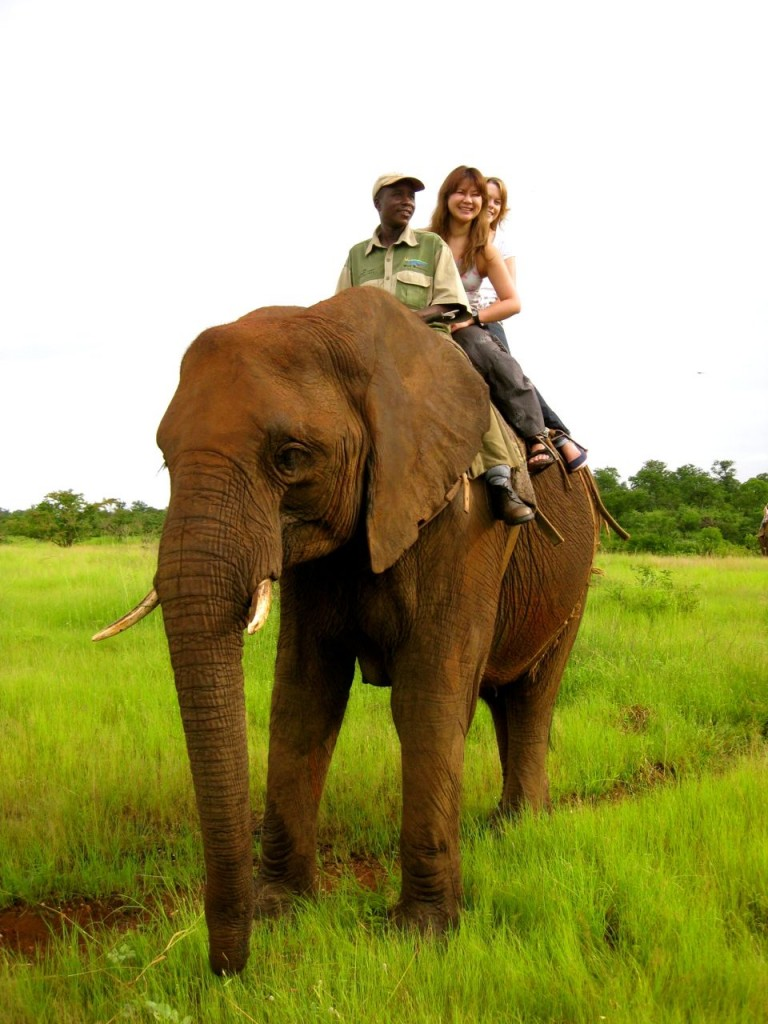 Riding African Elephant