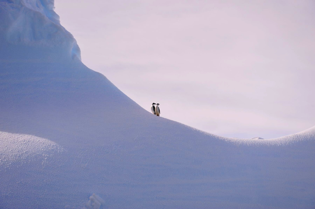 lonely penguins in Antarctica