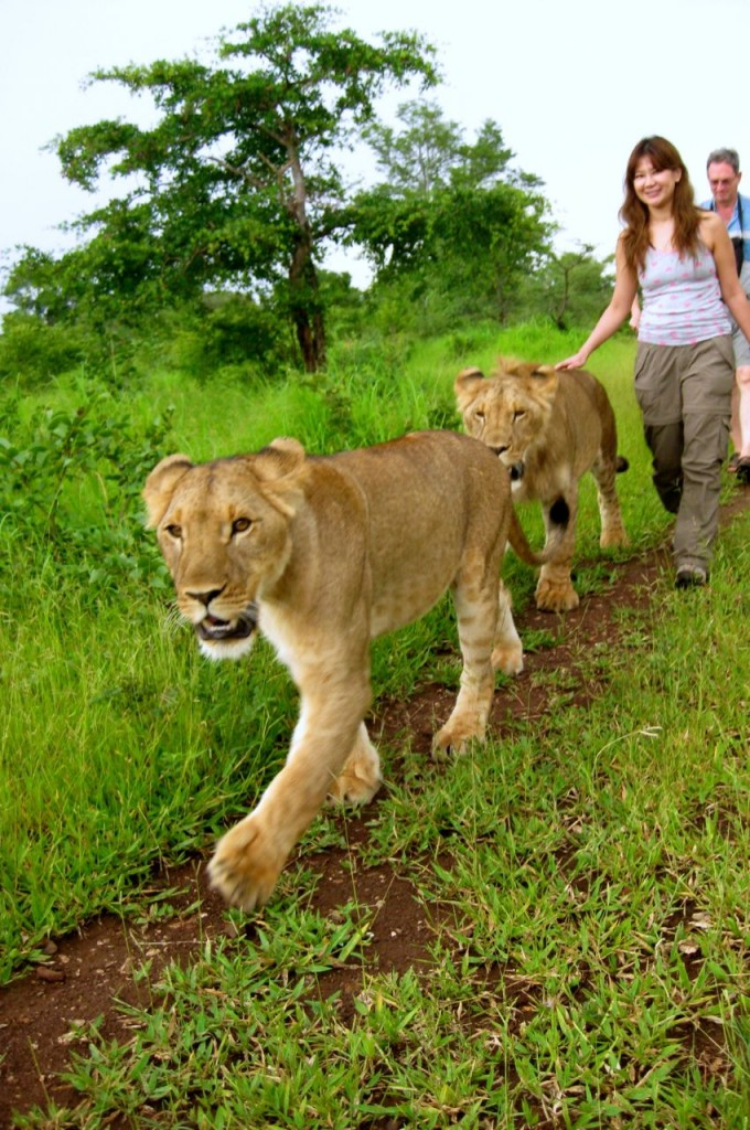 walking-with-the-lion