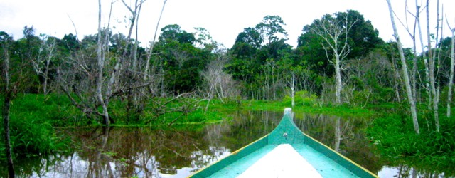 Brazil-Amazon Rainforest