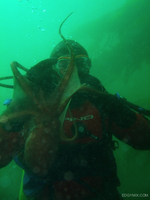 Octopus at bEagle Channel