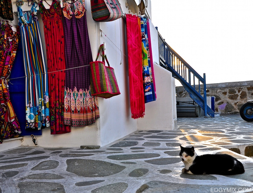 Cat and shop in Mykonos, Greece