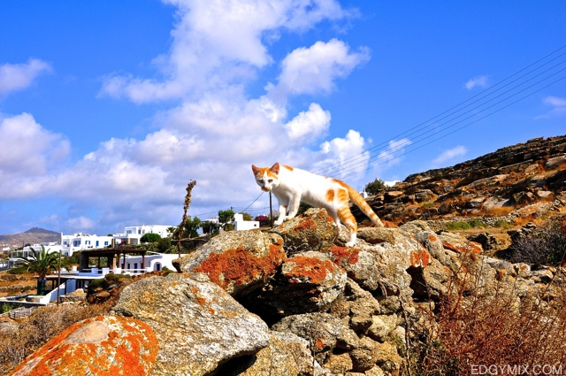 Cat at Mykonos, Greece