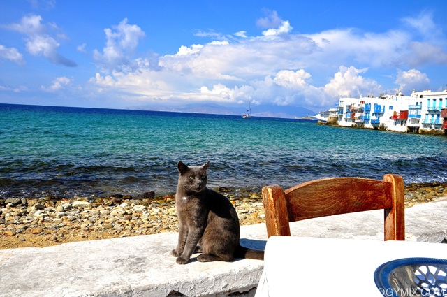 Cats at Mykonos Beach