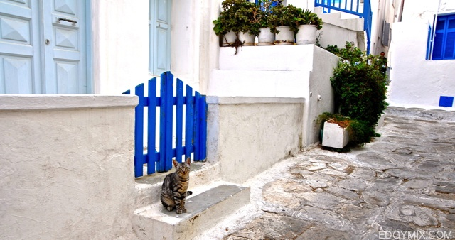Cute cat from Mykonos, Greece