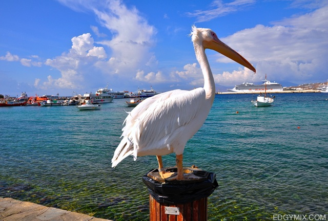 big bird in Mykonos, Greece