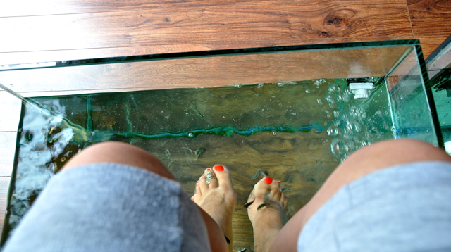 fish foot spa at torremolinos spain