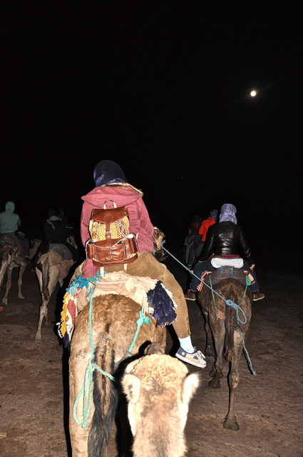 riding camel under the moon, morocco