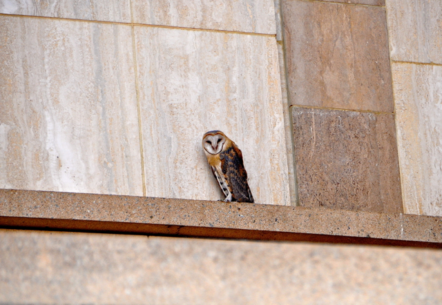 owl in The Basilica of Our Lady of Peace