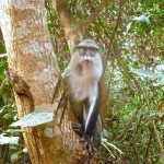 Tafi Monkey Sanctuary and Wli Waterfall, Ghana