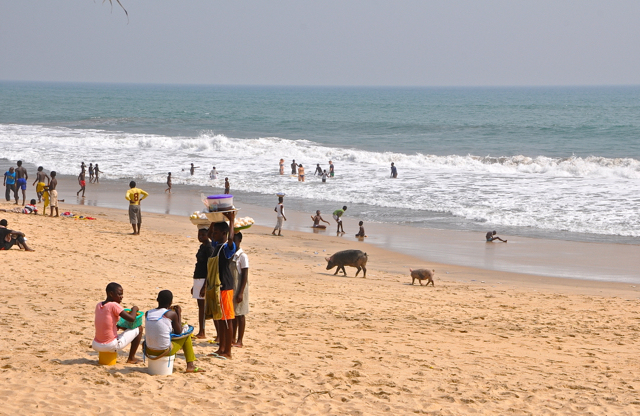 pig in the beach-ghana