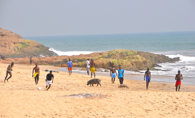 pig playing football on the beach, ghana