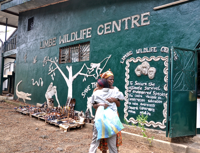 limbe wildlife center, cameroon