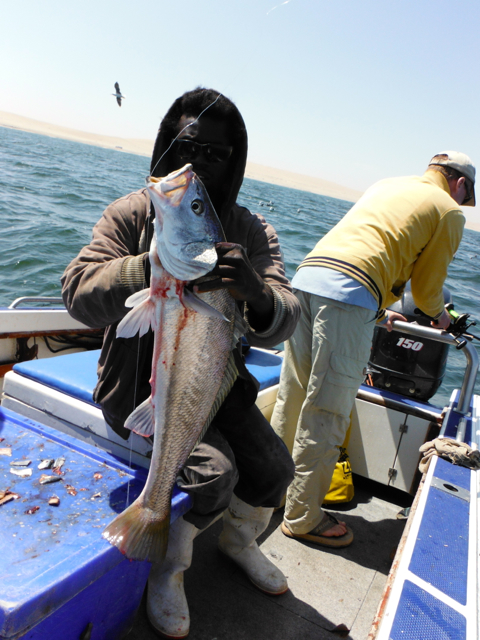 Deep Sea Fishing Namibia