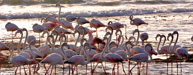 Namibia, Flamingo and Me