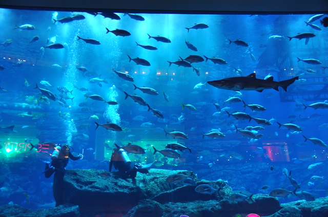 diving in aquarium, dubai