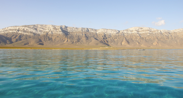 dolphin watching at socotra, yemen
