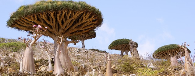 The Most Alien Place on Earth-Socotra